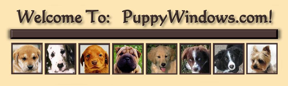 2018-PuppySlideShow1Borderless.png